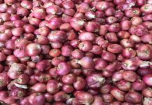 Chennai small onion